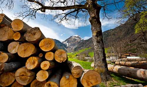 木材加工前景惨淡 提高利用率势在必行