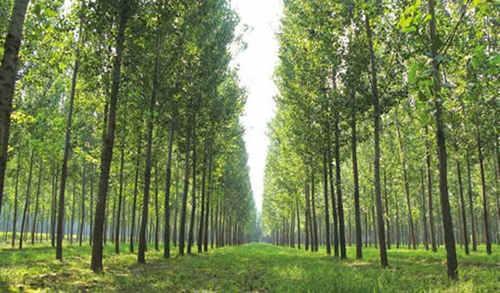 加拿大木业携手南京林业大学 助推木结构产业发展