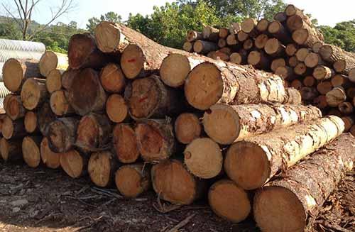 俄羅斯工貿部:禁止對華出口木材是不切實際的